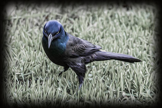 The Grackle by Jeff Swanson