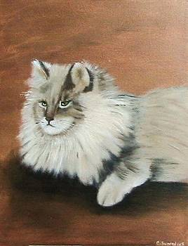 The Mane cat by Catherine Swerediuk