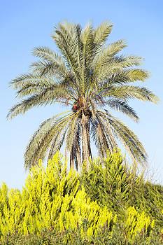Ramunas Bruzas - The Palm