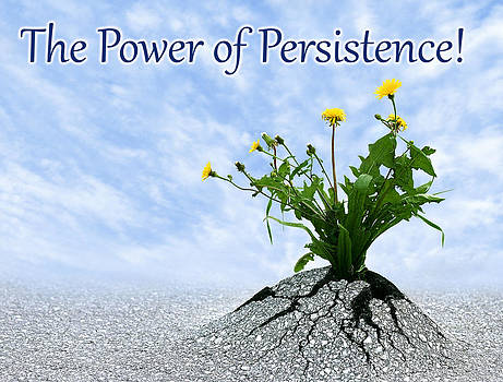 Dreamland Media - The Power of Persistence