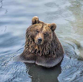 Thomas Schreiter - The Wet Bear