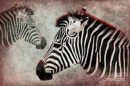 Angela Doelling AD DESIGN Photo and PhotoArt - The Zebra
