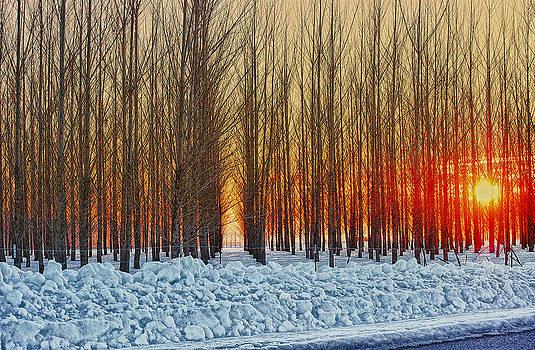 Thin trees by Dan Quam