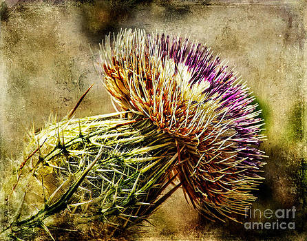 Thistle by Barbara Youngleson