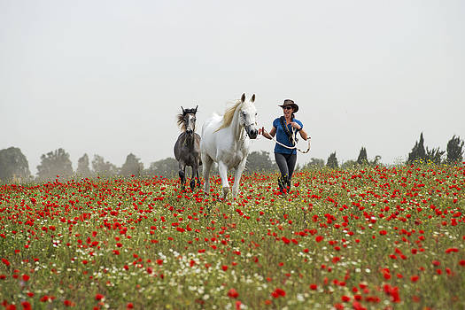 Three at the poppies' field... 3 by Dubi Roman