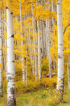 Through The Trees by Randy Giesbrecht