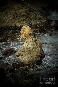 Tidepool Buddha by Mark Cheney
