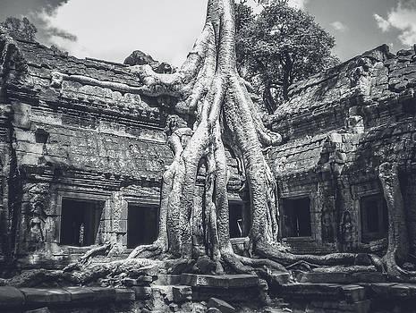 Tree in Ta Phrom - Angkor Wat - Cambodia by Leander Nardin