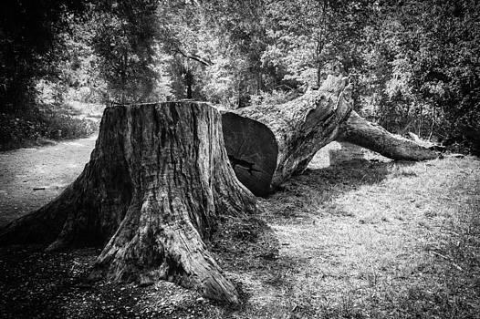 Tree by Mark Leong