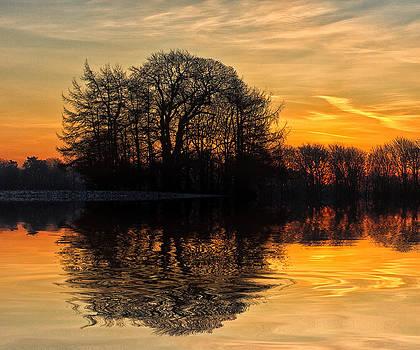 David Pringle - Tree Reflections