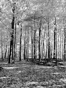 Trees by Karolina Olszewska