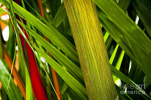 Tim Hester - Tropical Background
