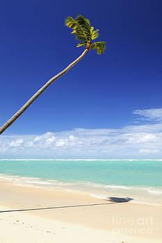 Elena Elisseeva - Tropical beach and palm tree