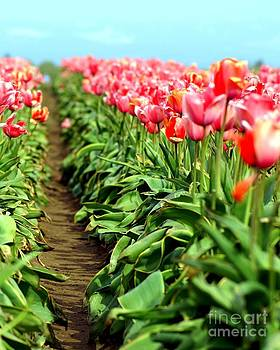 Tulip Trail by Sue Lyon-Myrick