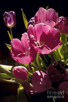 Floral- Tulips- Tulipomania by Feryal Faye Berber