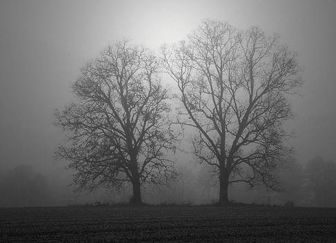Twin Oaks in the Fog  by Kelvin Taylor