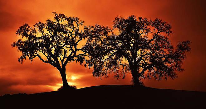 Two Trees at Dawn by Joe Josephs