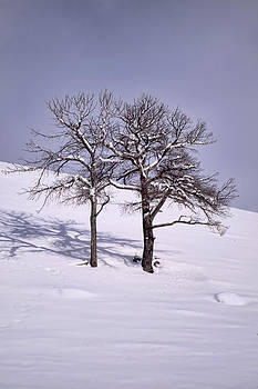 Two Trees by Richard Verkuyl