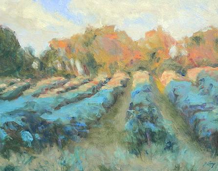 Vineyard Evening by Michael Camp