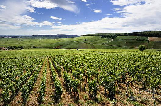 BERNARD JAUBERT - Vineyard of Cotes de Beaune. Cote d