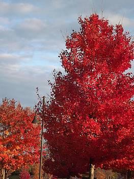 Vivid Autumn Trees by Kathy Budd