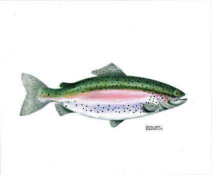 Wallace Brantley Sport Fishing Series Rainbow Trout by Sharon Blanchard