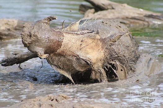 Hermanus A Alberts - Warthog Mud Bath