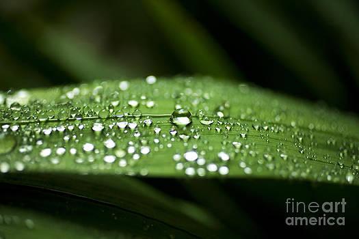Charmian Vistaunet - Water droplets on Grass