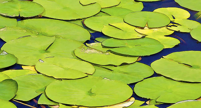 David Letts - Water Lilly