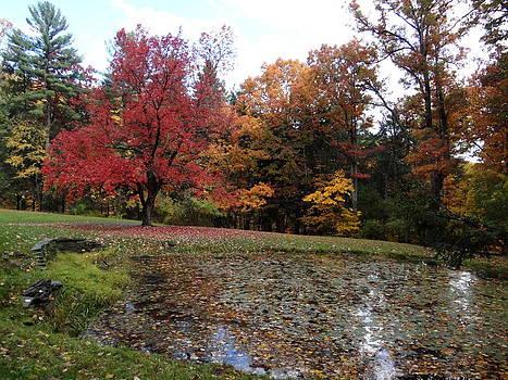Watkins Glen State Park by Hermien Pellissier