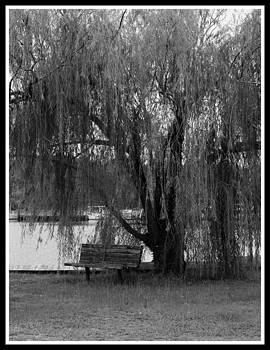 Weeping Willow by Carolyn Ricks