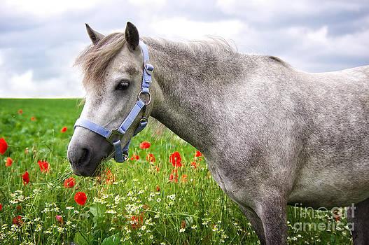 Angela Doelling AD DESIGN Photo and PhotoArt - Welsh Pony
