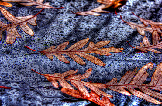 Wet leaves and raindrops 01 by Andy Lawless