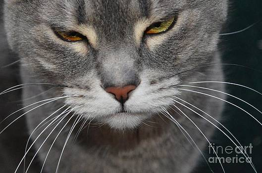 Whiskers by Theresa Davis