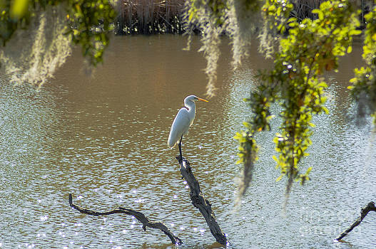 Dale Powell - White Heron in Magnolia Cemetery