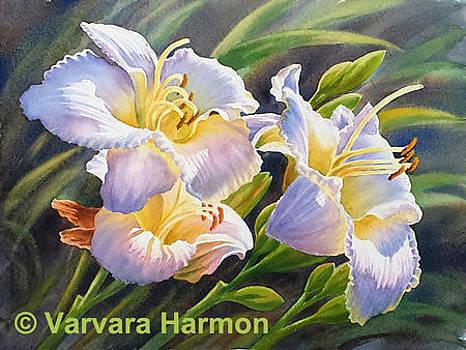 White Lilies by Varvara Harmon