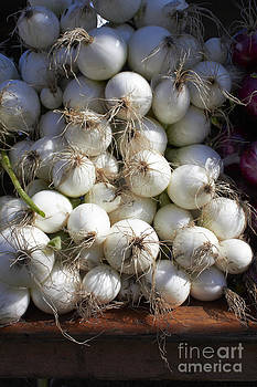 White Onions by Tony Cordoza