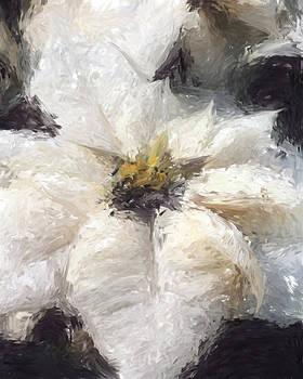 White Poinsettias Christmas Card by Jennifer Hotai