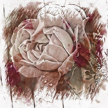 White Rose by Angel Eowyn