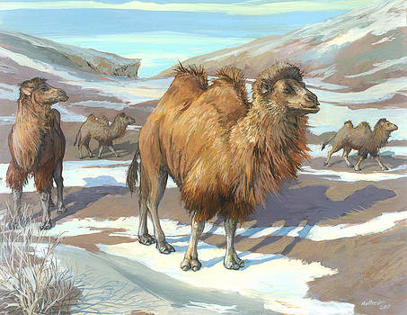 Wild Bactrian Camels by ACE Coinage painting by Michael Rothman