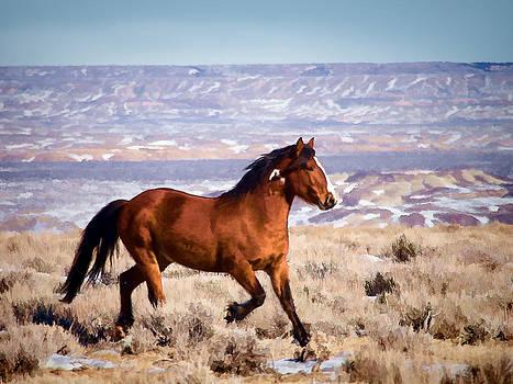 Nadja Rider - Eagle - Wild Horse Stallion