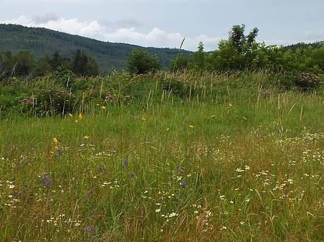 Gene Cyr - Wildflower Field
