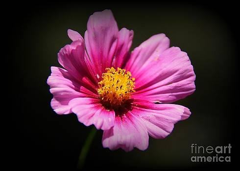 Wildflower by Lisa L Silva