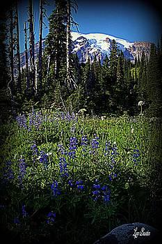 Lynn Bawden - Wildflowers
