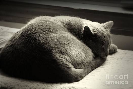 Cat Nap by  Nick Solovey