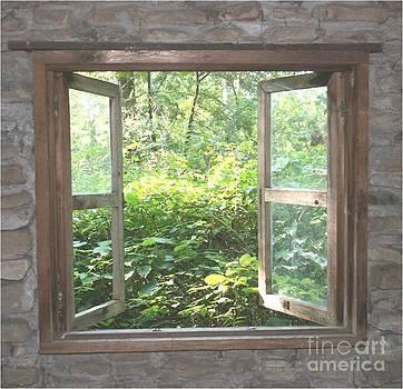Window by Patty  Thomas