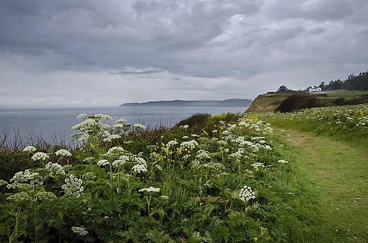 Tom Trimbath - Windswept May Meadow