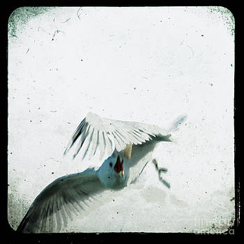 Wings by Sharon Coty
