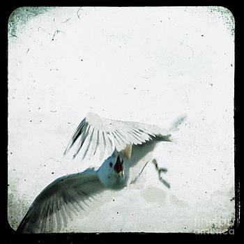 Wings by Sharon Kalstek-Coty
