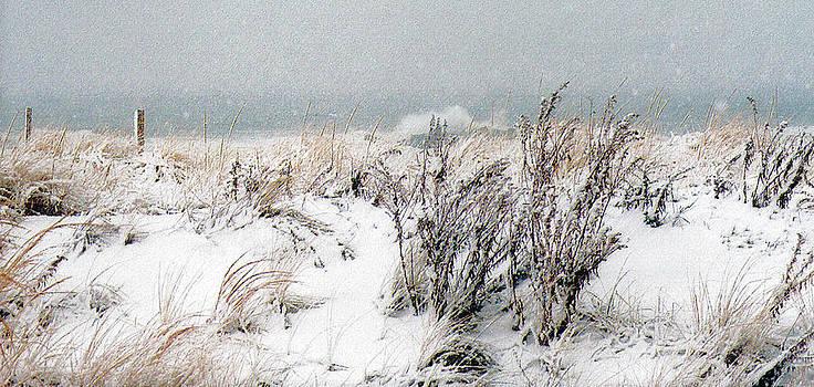 Winter Dunes by William Walker